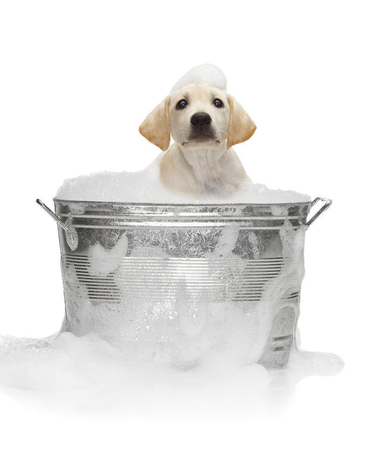 puppy-bath Doggie Baths